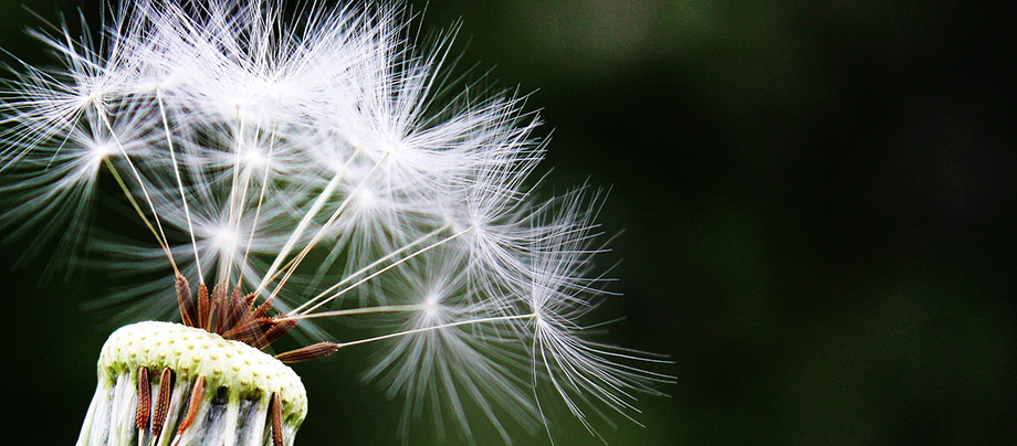 De vanligaste allergierna